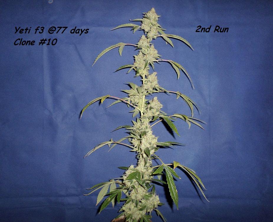 11-25-14UD_Flower_2.jpg