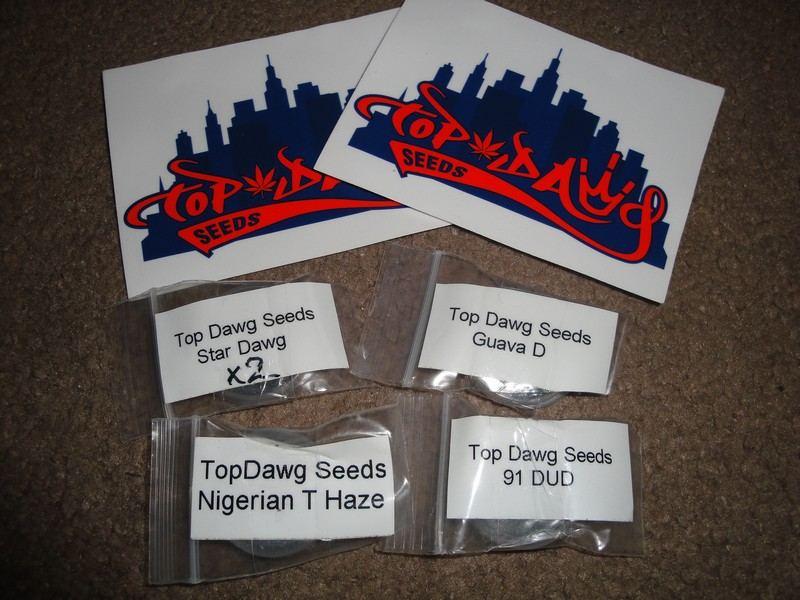 12-6 topdawgseeds! 255.jpg