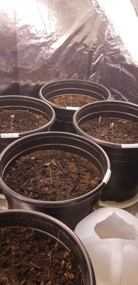 12_27 Sprouted .jpg