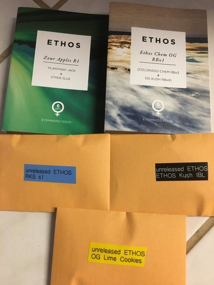 Anyone Growing Any Ethos Collective Beans??   Page 5   THCFarmer
