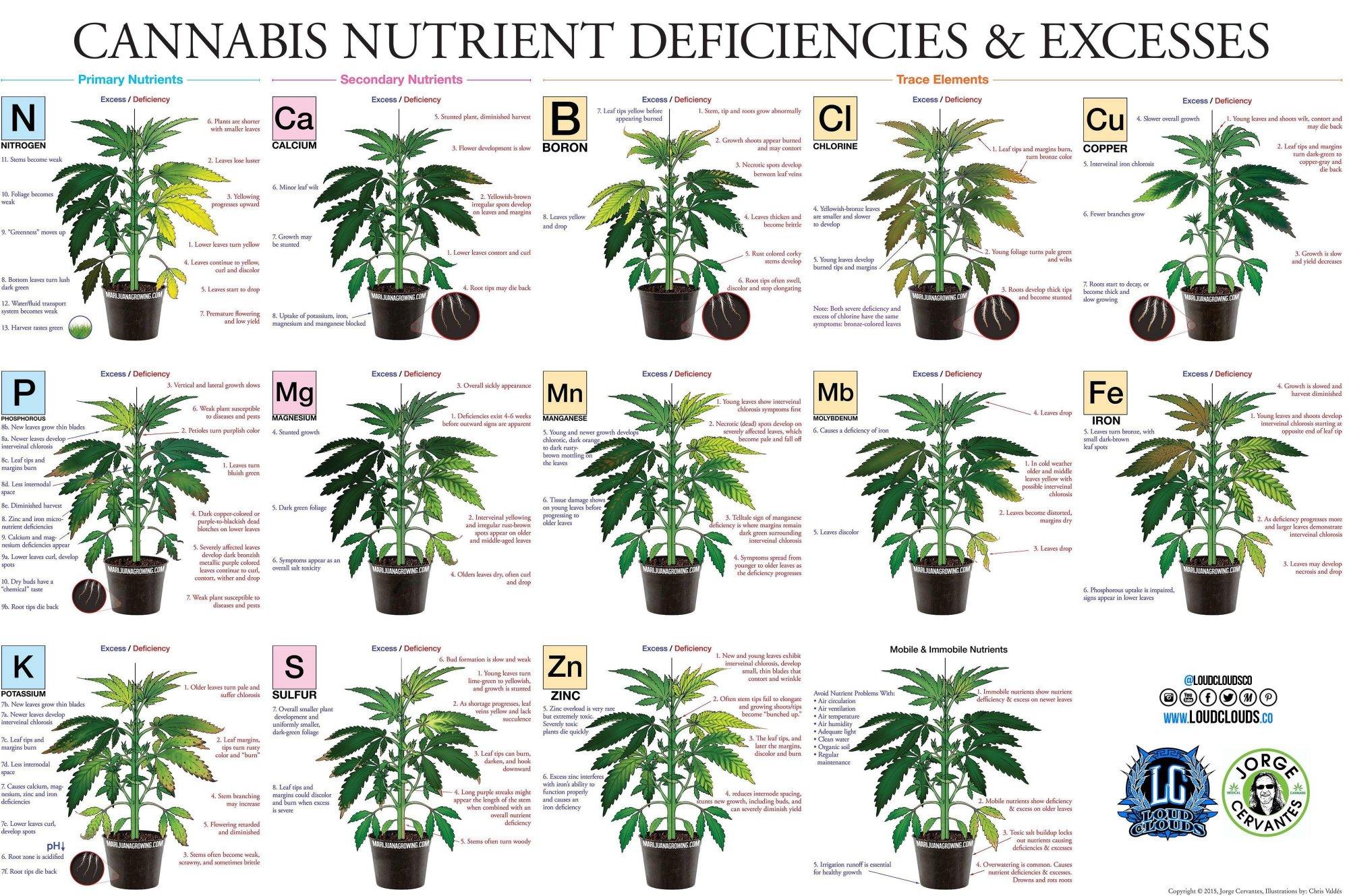 1plant deffeciency.jpg