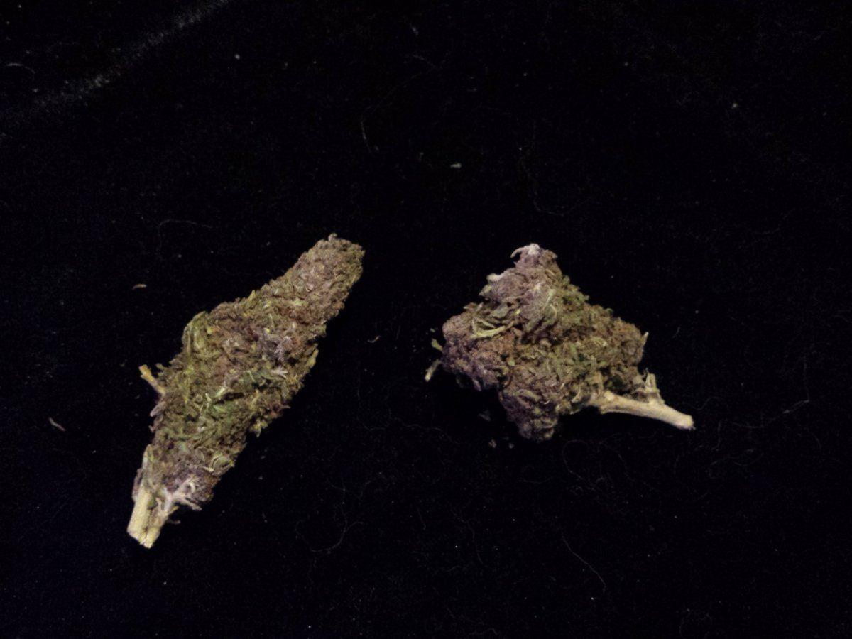 jagermeister marijuana strain | Page 3 | THCFarmer