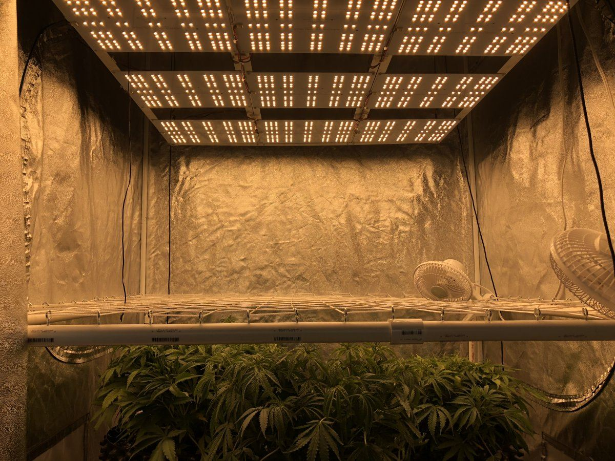 Quantum Boards | THCFarmer - Cannabis Cultivation Network