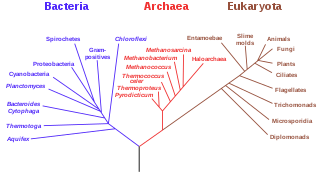 325px-Phylogenetic_tree.svg.png