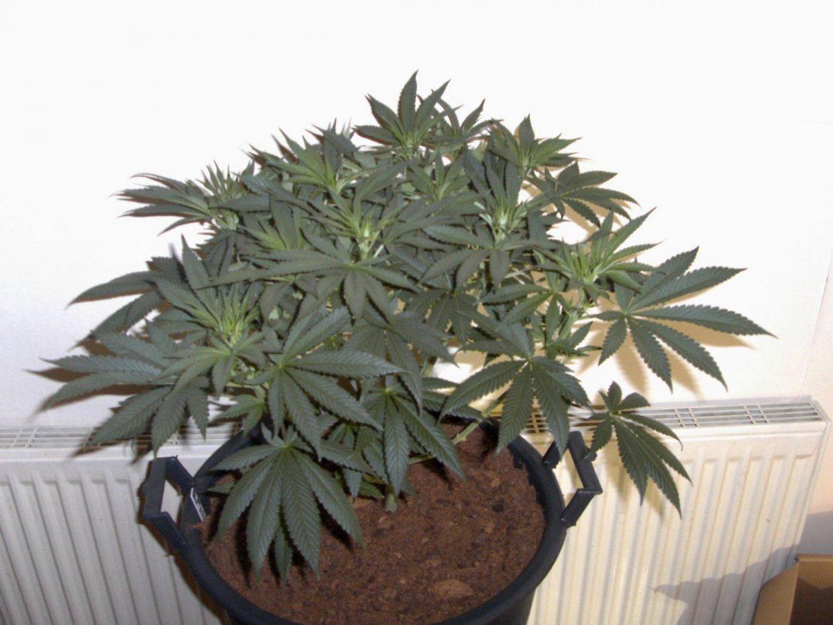 big tent plant shots 008.JPG
