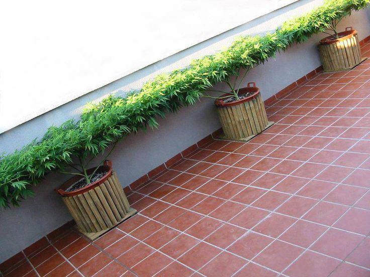 cactusrmoltis.jpg