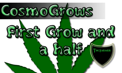cggrows.png