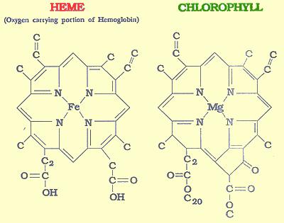 chloro.png