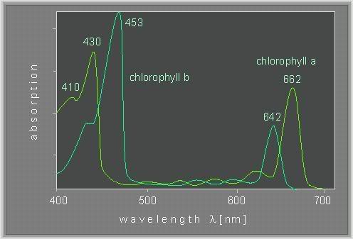 chlorophyll.jpg