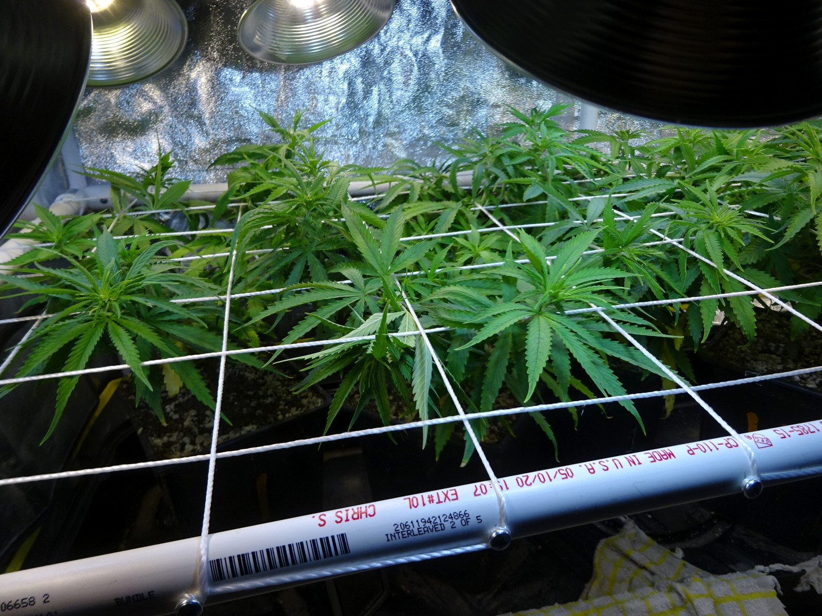 day 46 - 12-12 plants 1-3.JPG