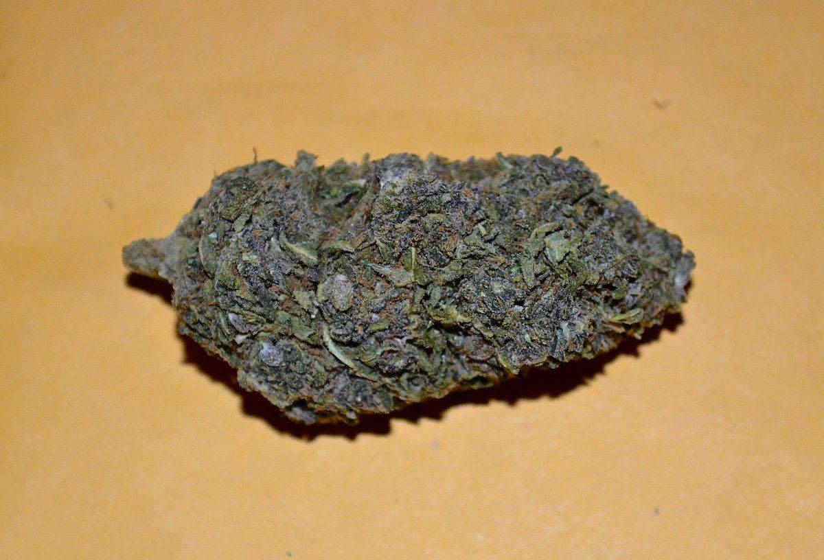 jagermeister marijuana strain   Page 3   THCFarmer
