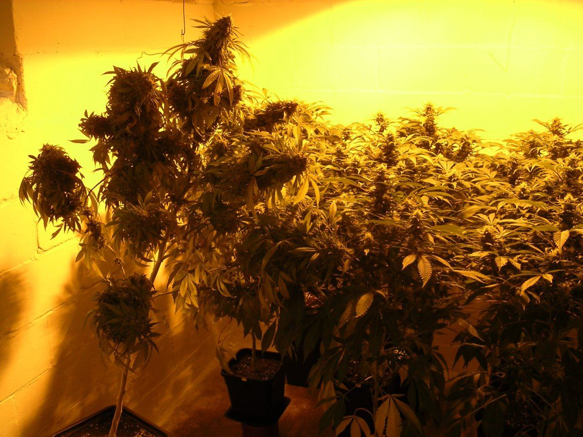 Gavita E Series Footprint Advice | THCFarmer - Cannabis Cultivation