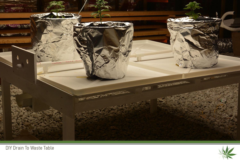 DTW_Table_Plants.jpg