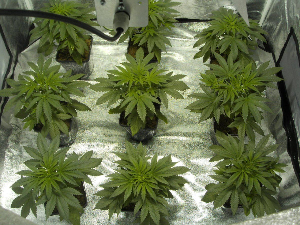 flowering girls 279.JPG