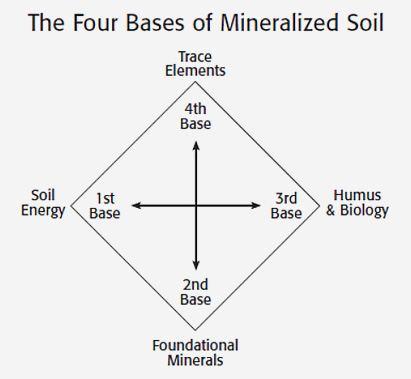 four-bases-of-soil-mineralization.jpg