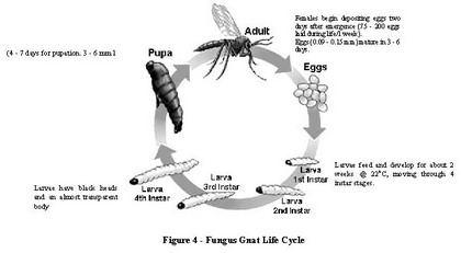 fungus_life_cycle.jpg