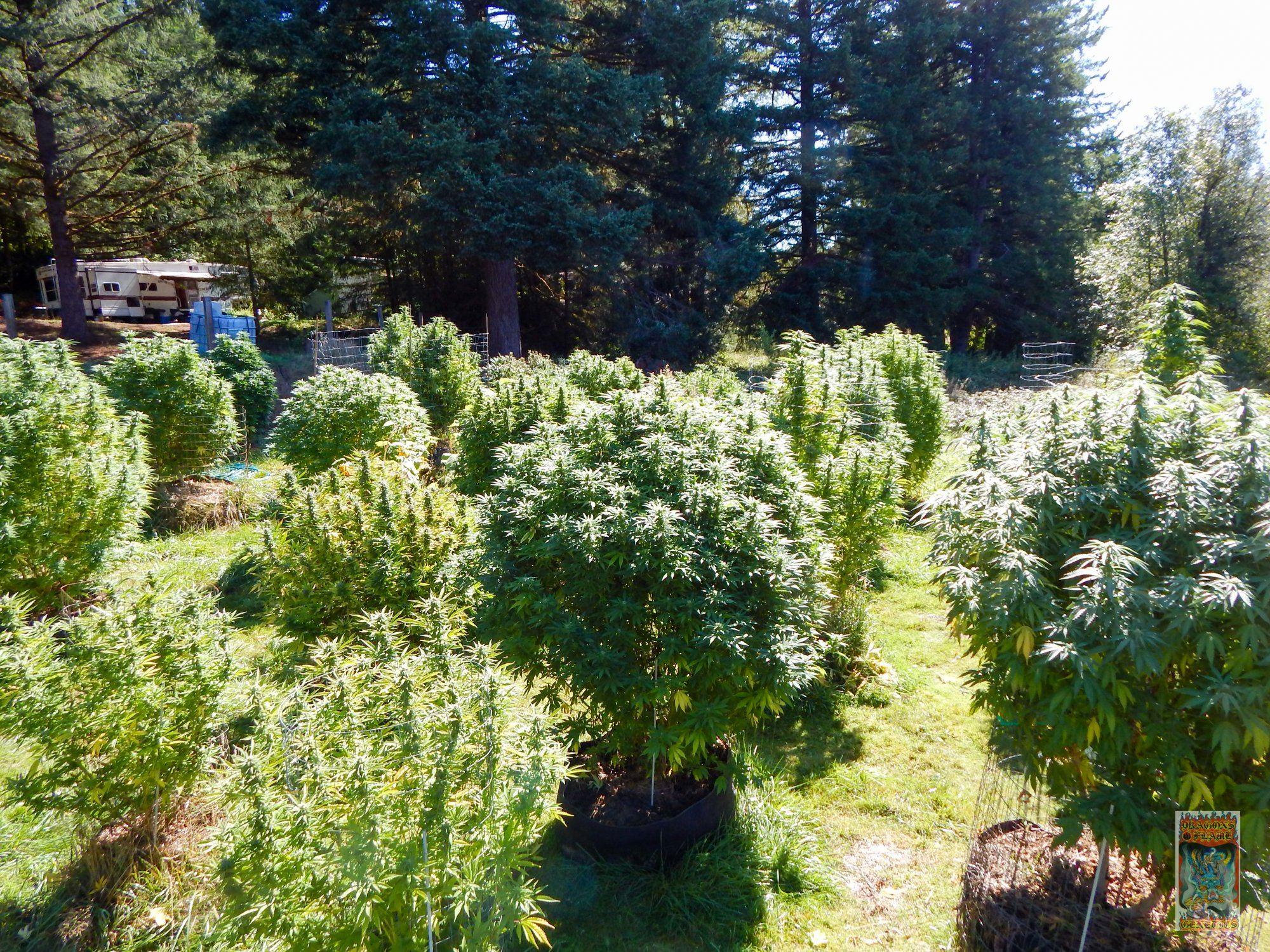 garden shot (1 of 1).jpg