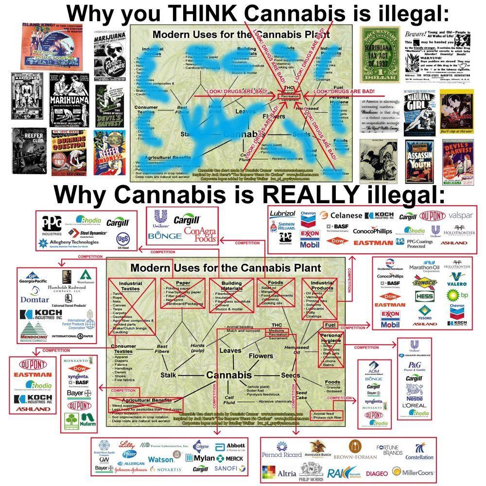 hemp-chart.jpg