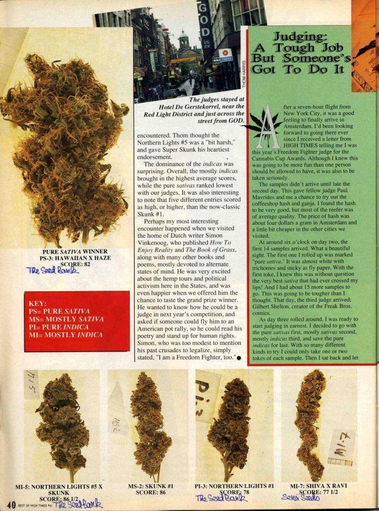 2017 Pine Tar Kush Outdoor' | Page 4 | THCFarmer - Cannabis