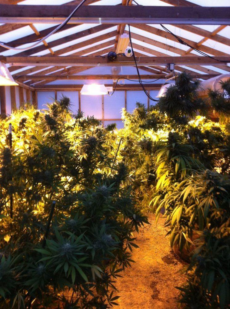 Solex greenhouse material | Page 4 | THCFarmer - Cannabis