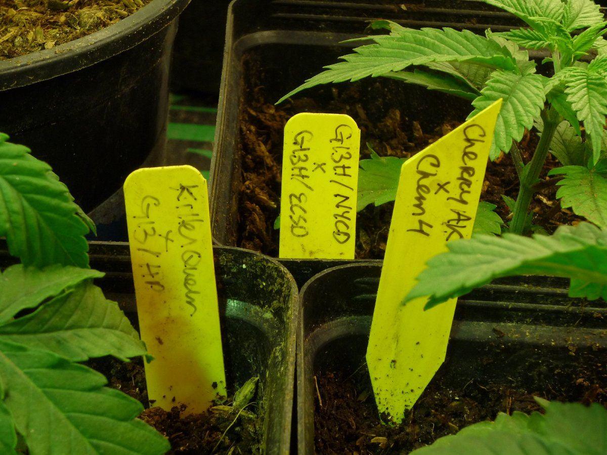 journal_seedlings2.jpg