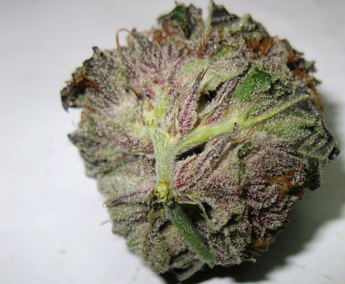 A Good Indica      | Page 2 | THCFarmer - Cannabis
