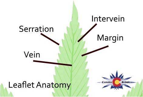 leaflet_anatomy.jpg