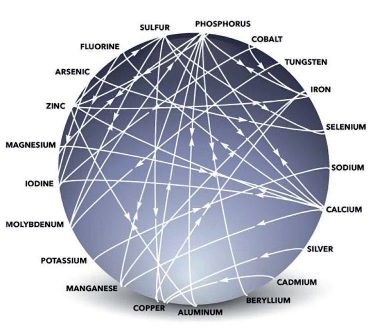 mulders-chart-positive-negative-plant-nutrient-interactions.jpg