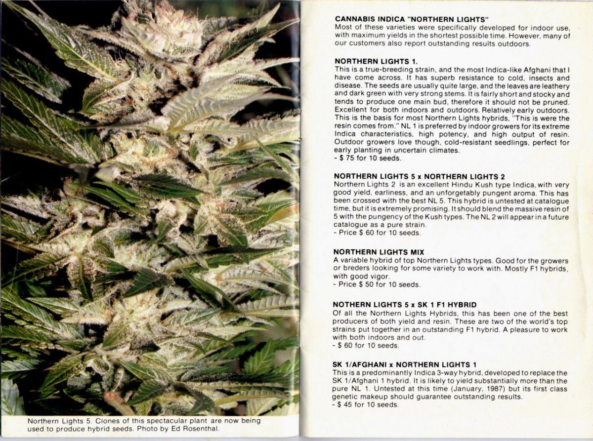 The History of OG Kush   Page 14   THCFarmer - Cannabis Cultivation