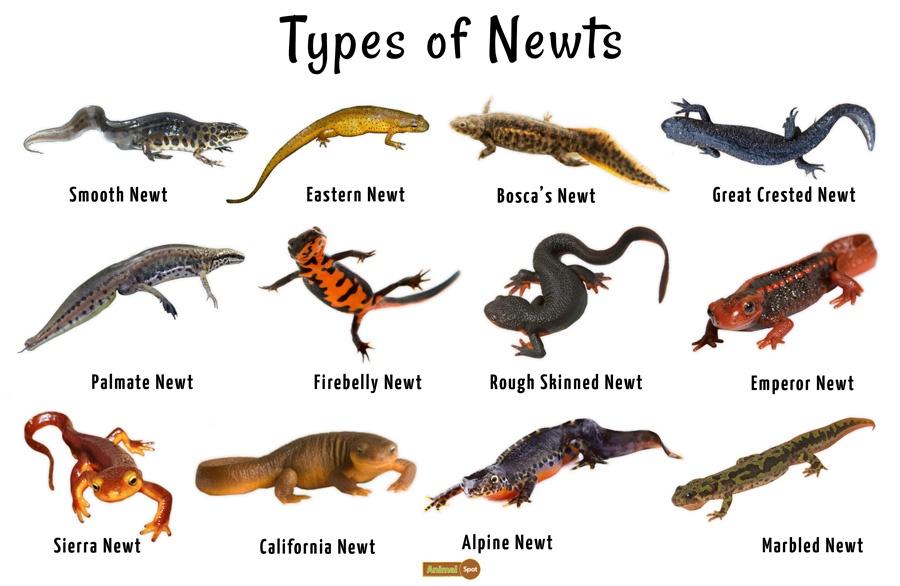 Newt-Pictures.jpg