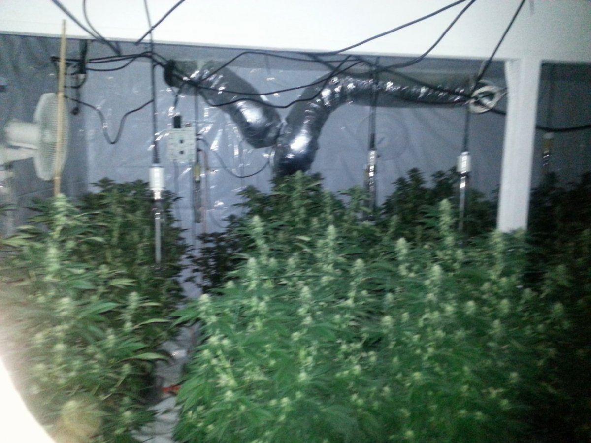 GH Micro & Bloom + Epsom | Page 2 | THCFarmer - Cannabis Cultivation