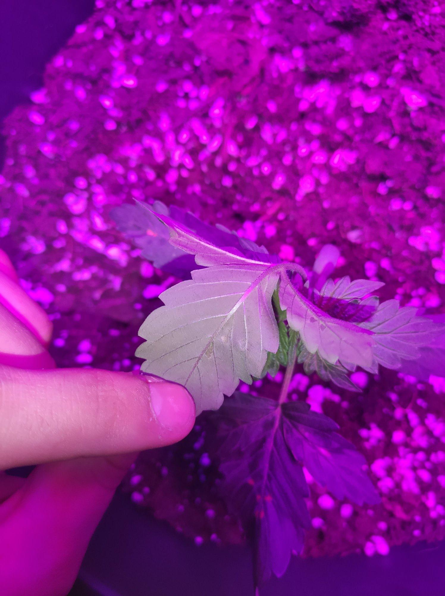 plant#3.jpg