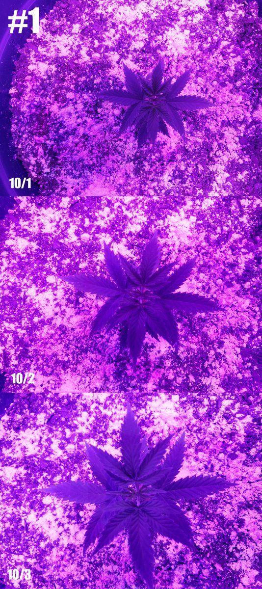 Plant01_top_10_1-10_3_lowres.jpg