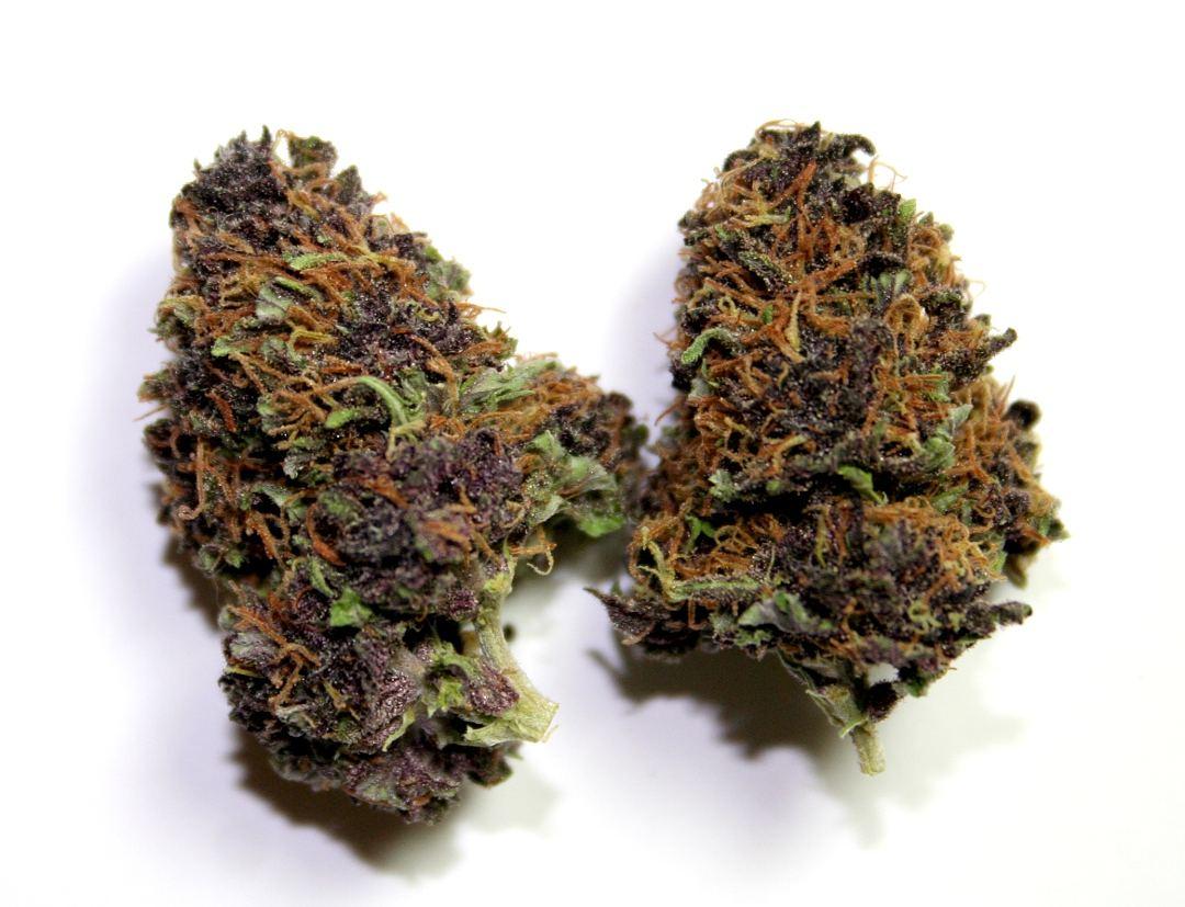 purplebuds.JPG