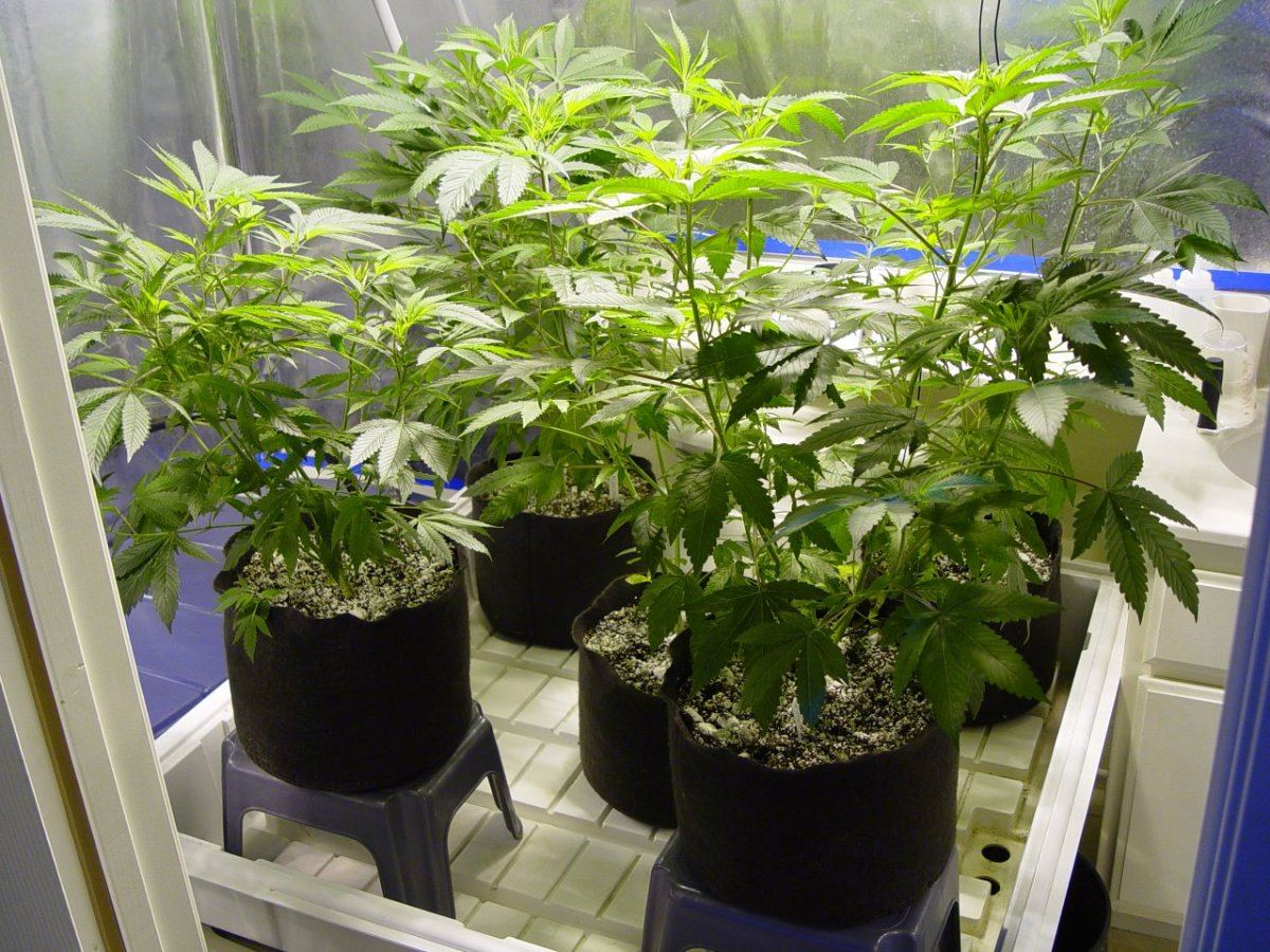 Roots Organic R17 Bloom-1.JPG