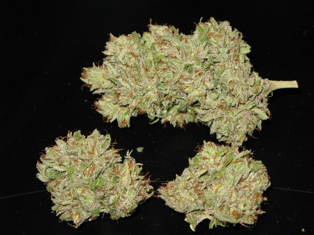 SBNugpheno2withflash.JPG