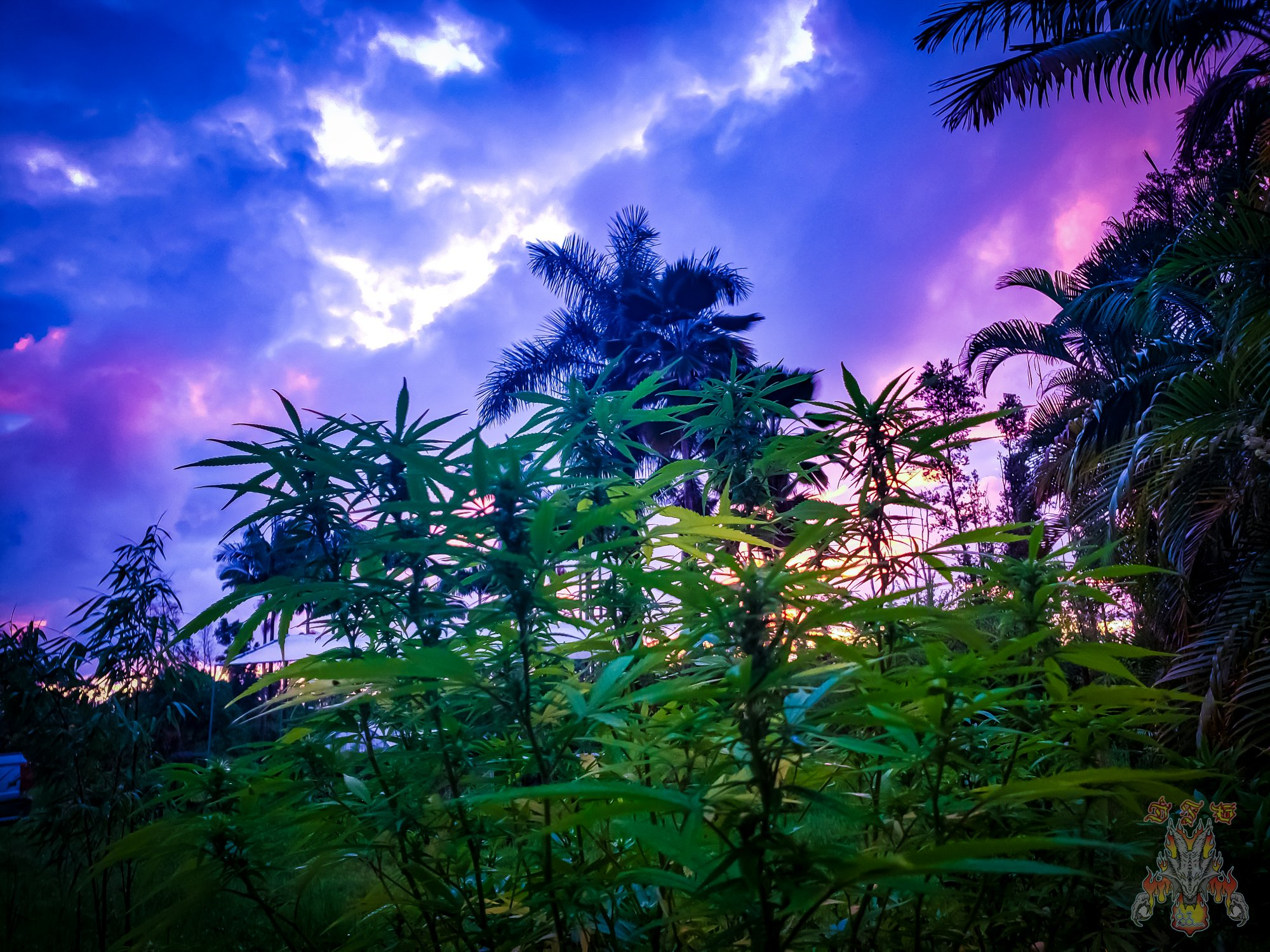sunrise-21.jpg