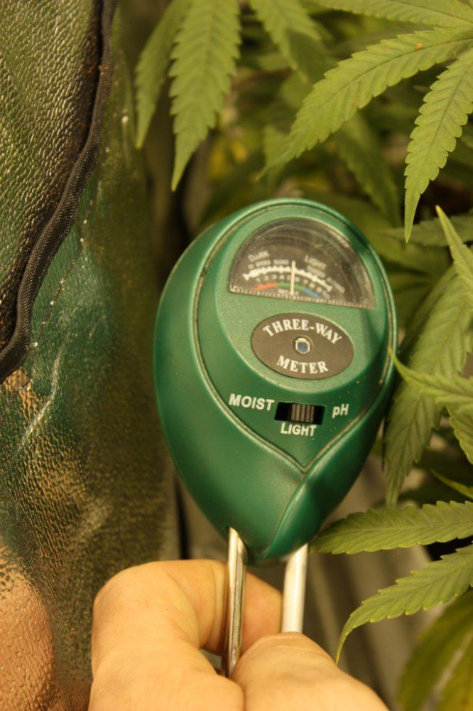 42 Plants 1x1000 Watt Light:) | THCFarmer - Cannabis