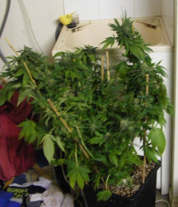 sweet.seeds.fems.314.jpg