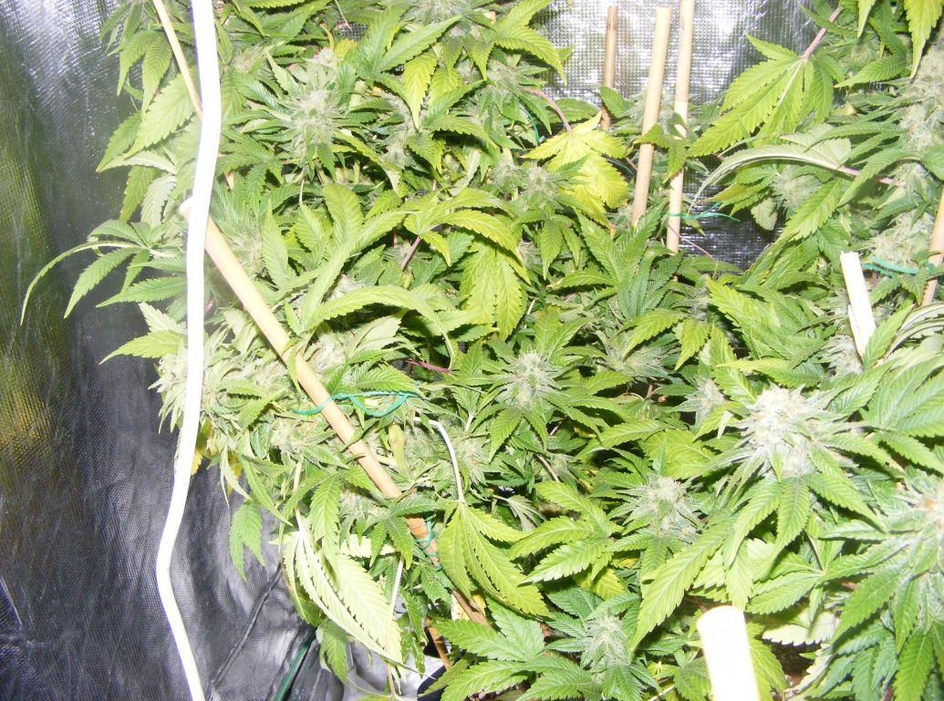 sweet.seeds.fems.354.jpg