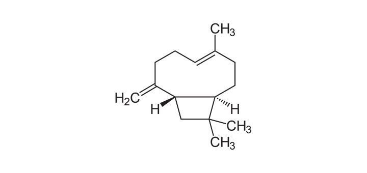 TerpenesBetaCaryophyllene.jpg