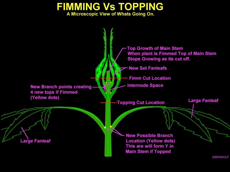 Topping Vs Fimming Vs LST Vs LEAVE IT ALONE????? | THCFarmer