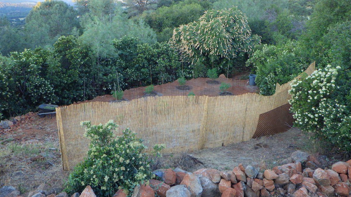 topside garden pic.JPG
