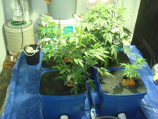 uc week 3 1 new plant GG.jpg