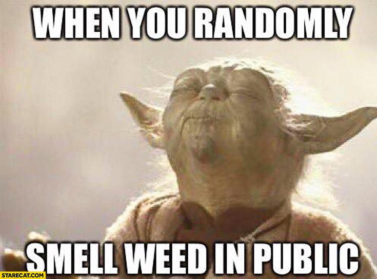 when-you-randomly-smell-weed-in-public-yoda-meme.jpg