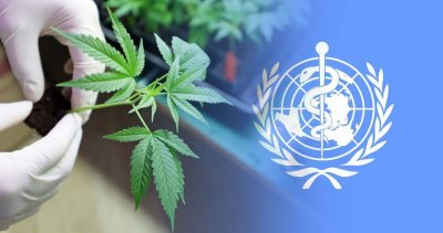 UN Votes to Delay Rescheduling of Cannabis for Second Time in Two Years