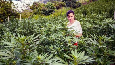 3 Years Into Medical Cannabis, Colombia Looks To Legalize Adult-Use