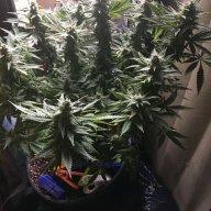 Herbalise